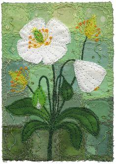 "https://flic.kr/p/7vo69r | White Poppies | White poppies. I love white flowers. Pure. 3 x 4 1/2"" 9 x11"" framed www.chursinoff.com/kirsten/"