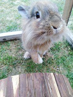 Bunnies, Rabbit, Animals, Bunny, Rabbits, Animales, Animaux, Animal, Animais