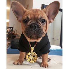 """Bling"", French Bulldog Puppy"