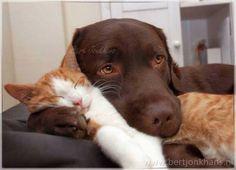 In het begin had Hessel nog niet door dat hij te zwaar was om boven op een kat…