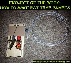 Project of the Week: How to make Rat Trap Snares