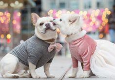 """Luna, uma cadelinha da raça Lulu da Pomerânia, e Sebastian, um bulldog francês, ficaram """"noivos"""" no mês passado. E, claro, ganharam um ensaio romântico como todo casal que vai casar merece, além de uma conta no Instagram para celebrar seu amor canino. Tudo aconteceu graças a Emily Abril, proprietária dos catiorineos e também fotógrafa. Ela explicou que teve a ideia do ensaio inusitado após perceber o carinho de um cachorrinho com o outro. """"Eu sempre achei que eles formaram um belo casal""""…"""
