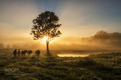 Country Foggy Sunrise by KateWall28  via 500 px