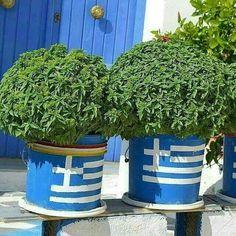Basil in Greek Flag Pot, Chios Island . Chios Greece, Corfu, Macedonia, Countries Europe, Greek Flag, Greek Culture, Creta, Greece Islands, Greek Wedding