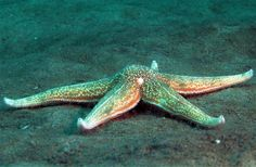 Marine Reserve in the North SeaClose-up of a starfish on the Cleaver Bank in the North Sea. Photographer: Greenpeace