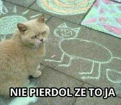 [Humor]Harry Potter Memes in Polish - Cytaty - Funny Shit, Wtf Funny, Funny Cats, Cute Animal Memes, Funny Animals, Memes Humor, Funny Images, Funny Pictures, Polish Memes