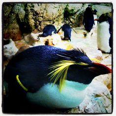 Pinguin Tiergarten Schönbrunn