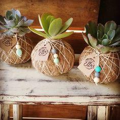 Unique Hanging Kokedama Ball Ideas for Hanging Garden Plants selber machen ball Deco Floral, Arte Floral, Cacti And Succulents, Planting Succulents, Ikebana, Air Plants, Indoor Plants, Deco Cactus, Art Floral Japonais