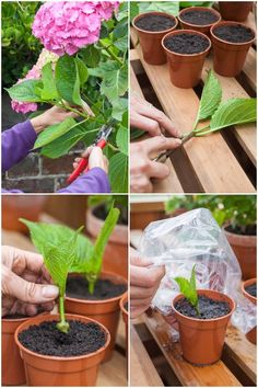 Growing Flowers, Growing Plants, Planting Flowers, Hydrangea Bloom, Hydrangea Care, Eco Garden, Outdoor Garden Decor, Rose Garden Design, Inside Plants