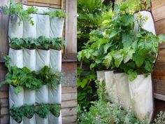 Turning a shoe organizer into a vertical herb garden is a clever idea. A great use of upcycling, it has the added benefit of conserving space in small gardens. Either add drain holes, or - even better, especially in times of drought - put them up about an inch and put a bit of gravel at the bottom. You won't have to water your DIY vertical herb garden as often. Try it with old gutters, too.