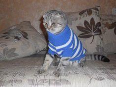 Подарю свитер для собачки