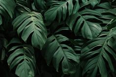 Download Tropical Green Leaves Background for free