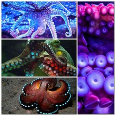 Octopus collage