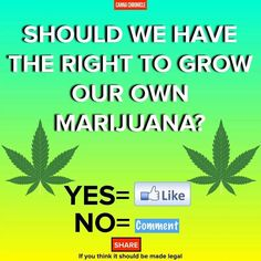 Cannabis Training U (@CannabisTU) | Twitter