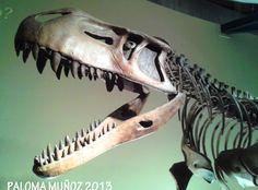 Cabeza de Tiranosaurio Rex Head of Tyrannosaurus Rex
