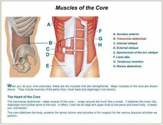 Core muscles great visual for pts!