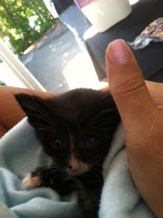 Little boy! #cat #kittens #pets #lovesavestheday