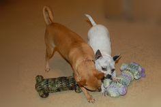 Dog Woobie (toy) Crochet Pattern
