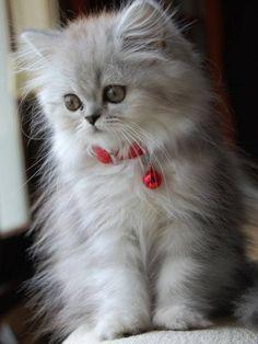 Ooooh! This little kitty is sooooooo fluffy. I want!
