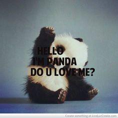 Cute panda :) yes I love you!!!!!