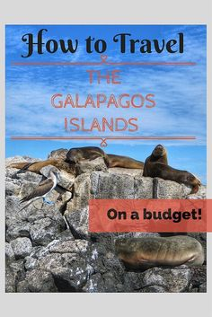 Six Days for $900: Doing the Galapagos on a Budget. Travel in South America.