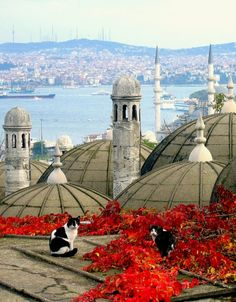 2 cute cats on the roof of a mosque in picturesque Istanbul,Turkey