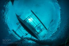 Ascending by gabedeleon #nature #photooftheday #amazing #picoftheday #sea #underwater