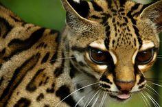 A cheetah cub!