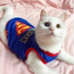 Superman Cat Clothes