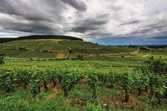 Climats de los viñedos de Borgoña