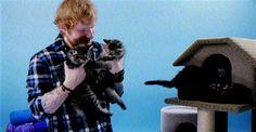 Ed Sheeran Cat Gif 2