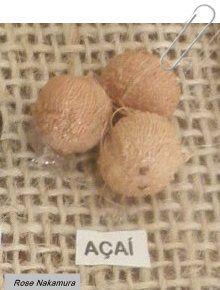 http://www.meuespelhoqueodiga.com.br/2014/11/sementes-da-regiao-norte.html-… #sementes,#fotografia,#regiãonorte,#Curiosidades