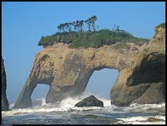 Elephant Rock - Quinault Indian Reservation - Washington - Love the name - I can totally see it!