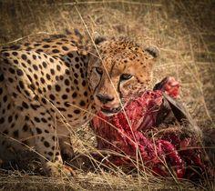 The Hunter by liborploek #animals #animal #pet #pets #animales #animallovers #photooftheday #amazing #picoftheday