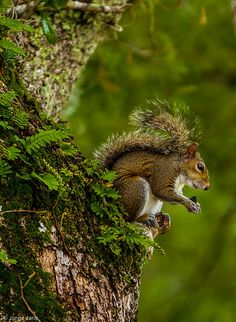 In the forest - Squirrel