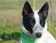 Badger 15907559 #dog