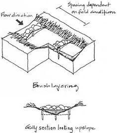 SOIL BIOENGINEERING MEASURES FOR HILL AND SLOPE