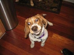 One derp to derp them all. Pets Who Take Derp To A Whole New Level, lol this is priceless Funny Dog Photos, Funny Animal Pictures, Funny Dogs, Funny Animals, Cute Animals, Funniest Pictures, Hilarious Photos, Fun Funny, Silly Faces