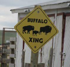 Buffalo Xing, Cheyenne, Wyoming