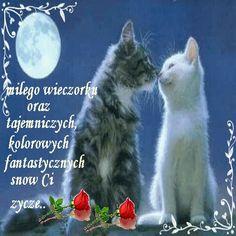 Wierszyki i gify na dobranoc: Gify na dobranoc kotki Magic Day, Good Night, Survival, Humor, Cats, Animals, Pools, Origami, Nova