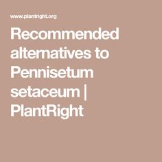 Recommended alternatives to Pennisetum setaceum | PlantRight