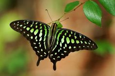 List of unusual and beautiful butterflies in the world, varies in patterns on the wings and color, butterflies with transparent wings, camouflage pattern.
