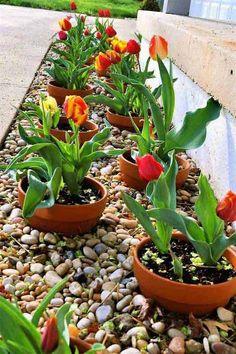 plantez les plantes en pots pour faciliter l'aménagement du jardin