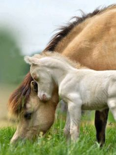 best images and pictures ideas about cute baby horses - how long do horses live