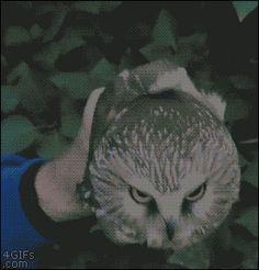 Owl Eyes.gif