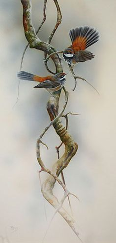 Rufous Fantails Bird Painting by artist Peta Boyce