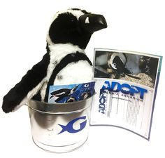 Georgia Aquarium Georgia Aquarium African Penguin Adopt Kit