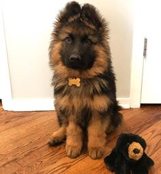 A woman revealed it took DAYS to get her 17 cats and dogs to pose together for a picture German Sheperd Dogs, Shepherd Dog, German Shepherds, Cute Dog Pictures, Dog Photos, Super Cute Animals, Cute Baby Animals, Pet Dogs, Dogs And Puppies