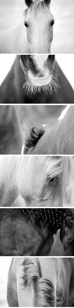 Svetlana Petrova: Black and White Reflections very unconventional shots of horses