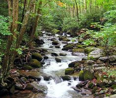 A quiet little stream in Gatlinburg, Tennessee hkaldis